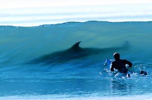 wave_shark.jpg