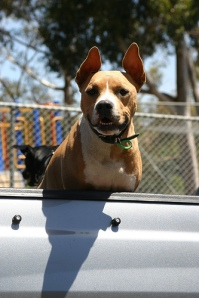 dog in ute