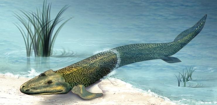 lobefinnedfish-extinct-wikipedia